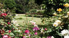 Rosenmeer | Rosen . Garten . roses . garden | Rheinland . Eifel . Koblenz . Gut Nettehammer |