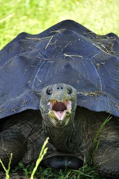 Tortoise...say what?