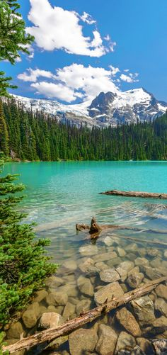 Gorgeous turquoise lakes in Alberta Canada! 10 Amazing Things To See And Do In Alberta, Canada! Visit Jasper National Park | Columbia Icefields | Banff National Park | Lake Abraham | Lake Louise | Peyto Lake and so much more!