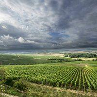 Chablis Les Clos - Joseph Drouhin Winery