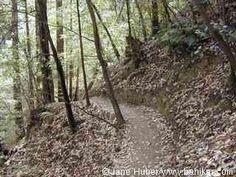 Loch Trail