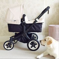 Bugaboo Buffalo...All Black frame, white hood.