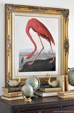 Audubon-American-Flamingo.jpg (565×864)