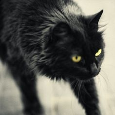 another black cat
