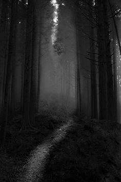 Under pressure precious things can break. Dark Photography, Black And White Photography, Dark Tales, Dark Forest, Magical Forest, Nocturne, Light And Shadow, Dark Wood, Dark Art