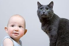 @angelseidenberg  I didn't go out and read this.  But thought it might have some info about cats and babies.  Great Ideas - How to get your cat(s) ready for new baby