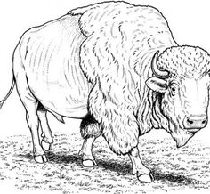 5 - Buffalo Coloring Pages from 101ColoringPages.com