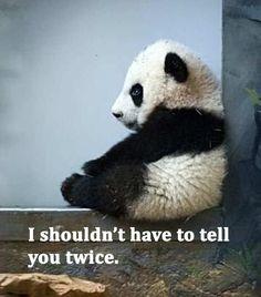 panda-is-pissed-1