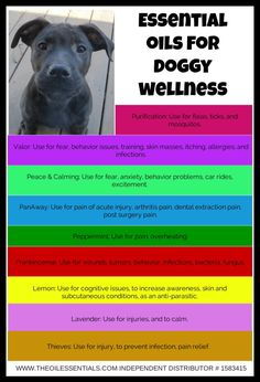ESSENTIAL OILS FOR DOGGY WELLNESS