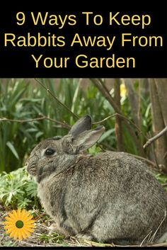 If you're tired of rabbits eating your vegetables and flowers you'll LOVE these 9 ways to get rid of rabbits from the garden