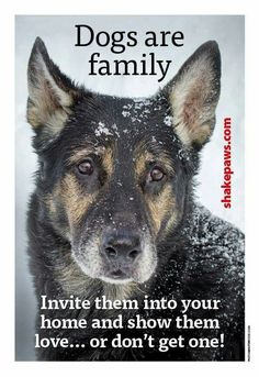 Dogs are family. Invite them into your home and show them love, or don't get one!