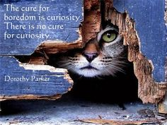 The cure for boredom is curiosity. There is no cure for curiosity. [Dorothy Parker]
