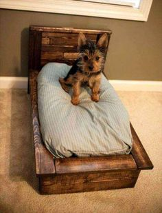 50 DIY Ideas for Wood Pallet Dog Beds: We all love our dogs as we love our family members. So, here we have some amazing pallet wood dog bed ideas to make your Wood Dog Bed, Pallet Dog Beds, Diy Pallet Bed, Diy Dog Bed, Pallet Art, Pallet Projects, Custom Dog Beds, Puppy Beds, Cute Little Dogs