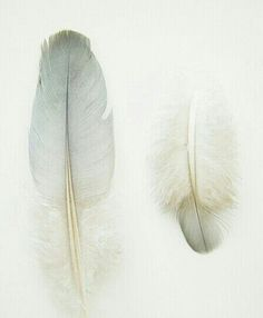 Light as a feather Hope Is The Thing With Feathers, Watercolor Feather, Boho Green, Bird Feathers, Color Inspiration, Art Photography, Delicate, Birds, Fine Art