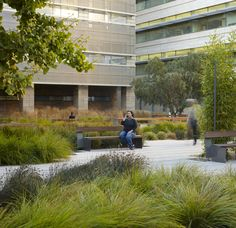 plaza planting landscape architecture | Photography by Bruce Damonte and Marion Brenner. Images may not be ...