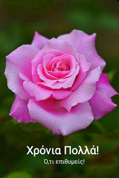 Beautiful Flowers Photos, Beautiful Flowers Wallpapers, Amazing Flowers, Beautiful Roses, Flowers Nature, Exotic Flowers, Spring Flowers, Love Rose Flower, Pretty Flowers