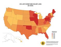 """U.S. beekeepers lost 40 percent of bees in 2014-15 