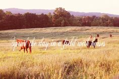 spend the day in a field with horses