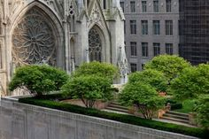 Rockefeller Center rooftop gardens overlook St. Patrick's Cathedral in Midtown Manhattan (© James Maher via Inhabitat)