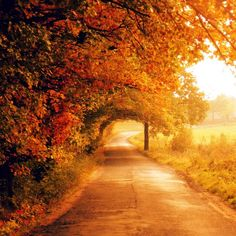 I would LOVE to walk here....right down this road...right under the overhang of those trees. Gorgeous.