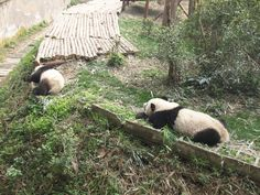 中国・成都&雅安 2012/03 - timorsparrow - Picasa ウェブ アルバム