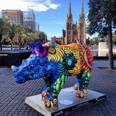 rhino sydney