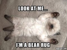 Or a kitty rug...