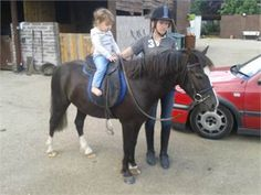 beautiful safe 12hh childs pony - safe 12hh childs pony http://www.equineclassifieds.co.uk/Horse/safe-12hh-childs-pony-listing-1018.aspx#.VBgSM1cTCZY