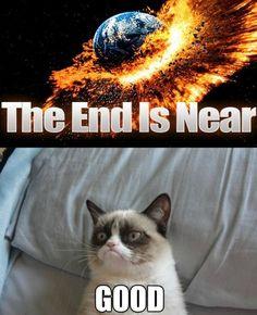 Grumpy Cat Apocalypse | Grumpy+Cat+Apocalypse.JPG