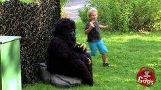Hungry Gorilla Attack Prank