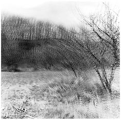 [Blurred View of Bare Trees in Field] Ralph Eugene Meatyard  (American, 1925–1972) Date: 1968–72 Medium: Gelatin silver print Dimensions: 19.2 x 19.3 cm (7 9/16 x 7 5/8 in.) Classification: Photographs Credit Line: Gift of Jeffrey Hugh Newman, 1998