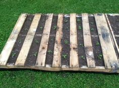 Reusing pallets for raised garden beds. I'm going to try some strawberries this way in the spring.