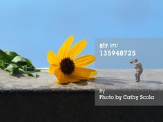Stock Photo : Miniature photographer with flower