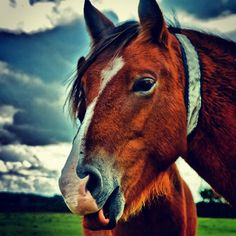 #horses #pony #toungesout #cute #funnyanimals #funny #hilarious #animal #carrot