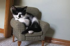 Cats in Tiny Cat Furniture