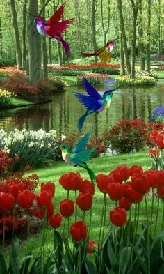 Science Discover Gardens Discover scenery Hi honey! Beautiful Flowers Garden, Flowers Nature, Beautiful Birds, Beautiful Images, Beautiful Gardens, Beautiful Nature Wallpaper, Beautiful Landscapes, Bird Canvas, Canvas Canvas