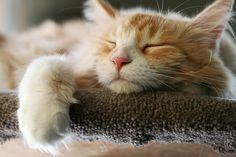 Sweet Dreams (byJaime Carter)