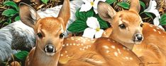 Whitetail deer fawn painting by wildlife artists Jerry Gadamus