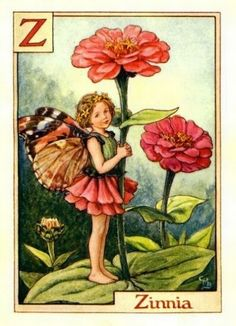 Zinnia Flower Fairy Vintage Print by Cicely Mary Barker. first published in London by Blackie, 1934 in A Flower Fairy Alphabet.
