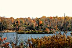 "One of a few ""exotic"" islands at Cowan Lake State Park. The Fall colors are just beautiful this year in Southwest Ohio!   http://www.clintoncountyohio.com/list/parks/cowan-lake-state-park2  image credit: Sarah Newton  #fallcolors #autumn #Ohio"