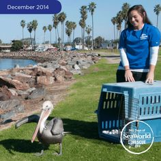 This beautiful pelican was returned to the wild after SeaWorld aviculturists and veterinarians removed a hook from its neck and nursed the bird back to health. #365DaysOfRescue