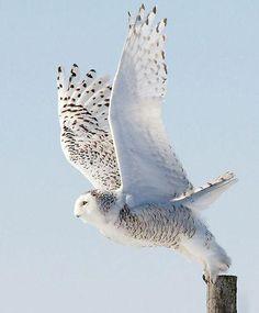 Desplegar las alas e intentar de nuevo,celebrar la vida y retomar los cielos. #Benedetti