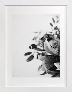 Berry bouquet by Stylisti at minted.com