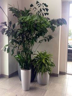 Delightful Great Looking Plant Grouping Maintained By Tom At Interior Plant Service In  San Diego. Gallery