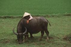 China. The water buffalo were like loveable giant dogs :)