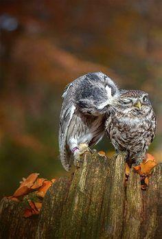   November   Autumn Creatures. Tanja Brandt Photography