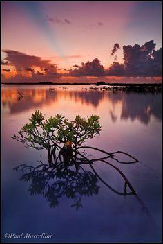 Image result for mangrove sunset