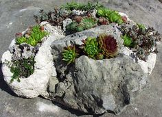 hypertufa free form sculpture.  This appeals to me...