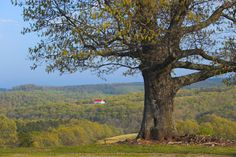 This guide to buying homestead land provides advice on the do's and don'ts of purchasing land, including property access rights, water/sewer drainage, mineral/timber rights, utility availability and buying mountain property.