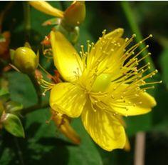 winter, lawns, herbs, gardenfood blog, gardens, gardening, san juan, sustainable living, blues